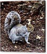 Squirrel In The Park-boston  V6 Acrylic Print
