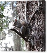 Squirrel On A Stick Acrylic Print