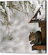 Squirrel On The Bird Feeder Acrylic Print