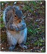 Squirrel Seeds Acrylic Print