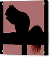 Squirrel Silouette Acrylic Print