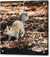 Squirrel Time Acrylic Print
