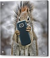 Squirrel With Cellphone Acrylic Print