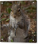 Squirrel With His Obo Acrylic Print