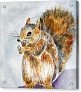 Squirrel With Nut Acrylic Print
