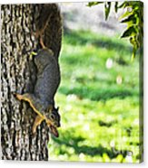 Squirrel With Pecan Acrylic Print