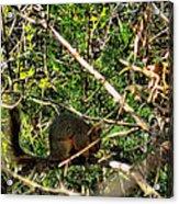 Squirrelcomp 2009 Acrylic Print