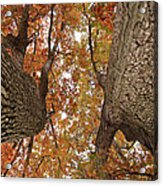 Squirrel's Vision Of A Good Day Acrylic Print
