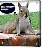 Squirrely Push Ups Acrylic Print