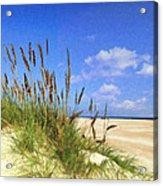 St  Augustine Beach Grass Acrylic Print