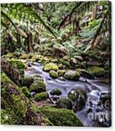 St Columba Falls Acrylic Print