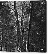 St-denis Woods 2 Acrylic Print