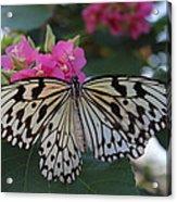 St. Louis Zoo Butterfly Acrylic Print