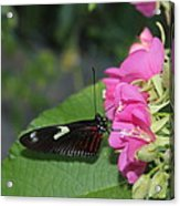 St. Louis Zoo Butterly Acrylic Print