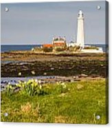 St Marys Lighthouse With Daffodils Acrylic Print