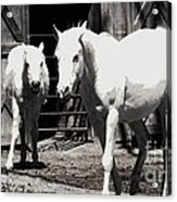Stable Pair Acrylic Print
