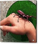 Stag Beetle On Hand Acrylic Print by Daniel Eskridge