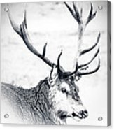 Stag In Black And White Acrylic Print