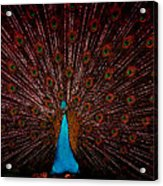 Stained Glass Peacock Acrylic Print