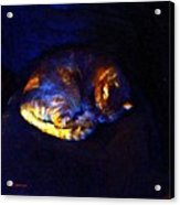 Stained Glass Snoozer Acrylic Print