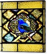 Stained Glass Template Blue Bird Of Happiness Acrylic Print
