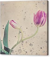 Stained Tulip Acrylic Print by Cristina-Velina Ion