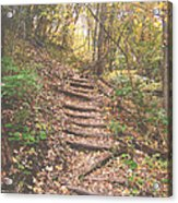 Stairs Into The Forest Acrylic Print