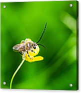 Staking A Claim - Featured 3 Acrylic Print