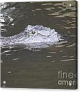 Stalker Acrylic Print