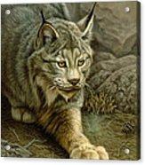 Stalking Lynx Acrylic Print