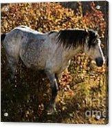 Stallion Of The Badlands Acrylic Print
