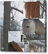 Stallions Collage There Is A Connection Acrylic Print