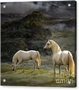 Stallions Of The Gods Acrylic Print