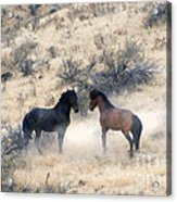 Stand-off Acrylic Print by Mike  Dawson