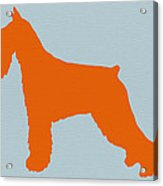 Standard Schnauzer Orange Acrylic Print by Naxart Studio