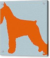 Standard Schnauzer Orange Acrylic Print by Naxart Studio