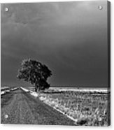 Standing All Alone Acrylic Print