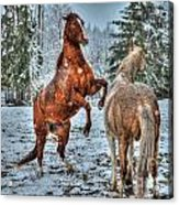 Standing In The Snow Acrylic Print by Skye Ryan-Evans