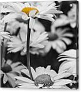 Standing Out From The Crowd 2 Acrylic Print