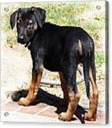 Standing Puppy Acrylic Print