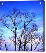 Standing Tall Acrylic Print by Jose Lopez
