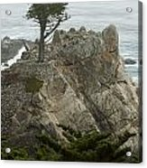 Standing Tall On The Rock Acrylic Print