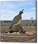 Standing Watch Of The Vineyard Acrylic Print