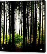 Stanley Park Triptych Right Acrylic Print