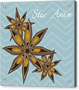 Star Anise Art Acrylic Print by Christy Beckwith
