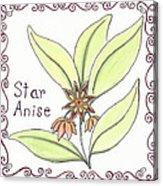 Star Anise Acrylic Print