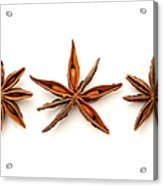 Star Anise Fruits Acrylic Print by Fabrizio Troiani