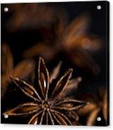 Star Anise Study Acrylic Print