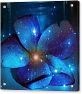 Star Light Plumeria Acrylic Print