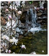 Star Magnolia And Flowing Water Acrylic Print